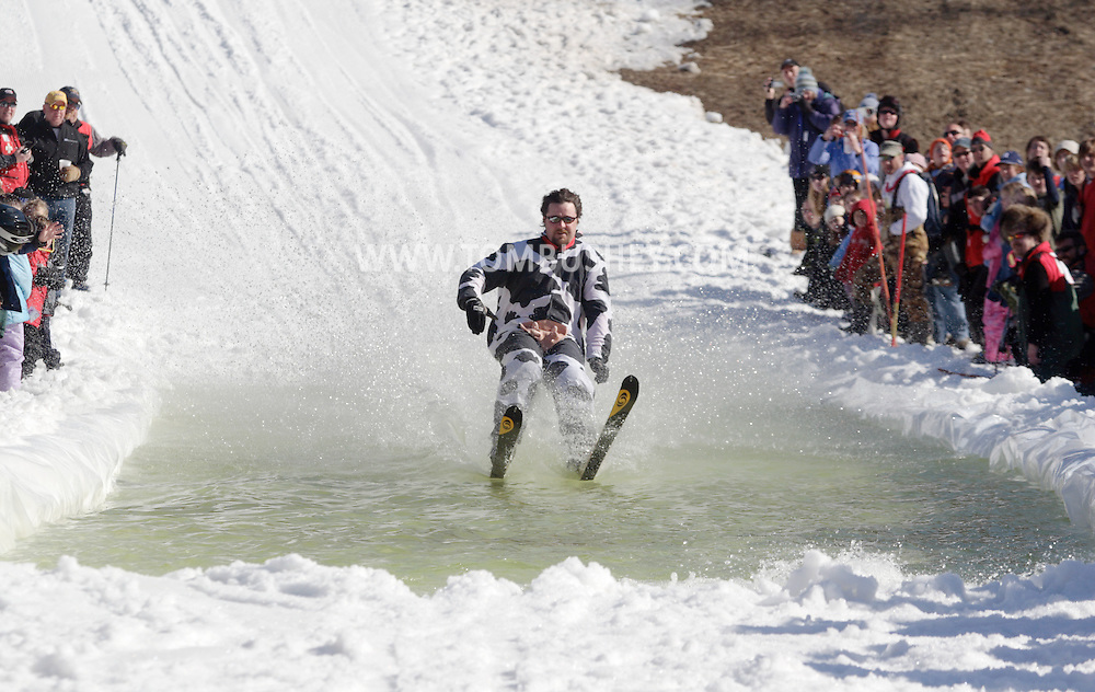 Warwick, NY - A skier wearing a cow costume crosses the water at the end of a run during the Spring Rally at Mount Peter in Warwick on March 29, 2008.