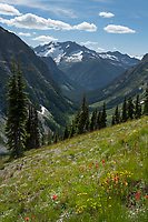 Wildflowers on Ragged Ridge, Mount Logan is in the distance. North Cascades National Park Washington