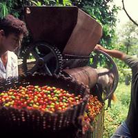 Muchachos con molino de cafe, Altamira de Caceres, Estado Barinas, Venezuela.