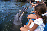 Young children play with a bottle nose dolphin at the Dolphin Research Center June 27, 1996 in Marathon Key, FL.  The center is where the original Flipper was trained and specializes in returning trained dolphins to the wild.