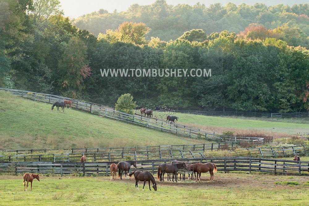 Otisville, New York - Thoroughbred horses graze in a field at Hidden Lake Farm on Oct. 4, 2016.
