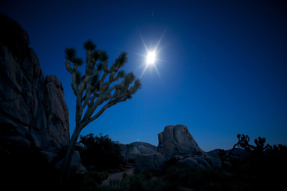 Joshua Tree, Moon, Stone