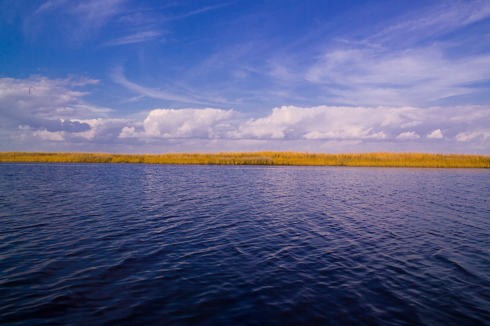 Bay St. Louis, Mississippi shoreline view of goldenrods from a boat. Boat trip through the back Bays of the Gulf of Mexico with Tony Lucas. Wild Goldenrods light up the shoreline while swirling and white fluffy clouds hover over the horizon. Calm blue water ripples in the foreground.