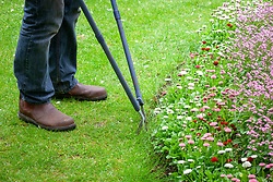 Trimming the edge of a lawn with long handled shears