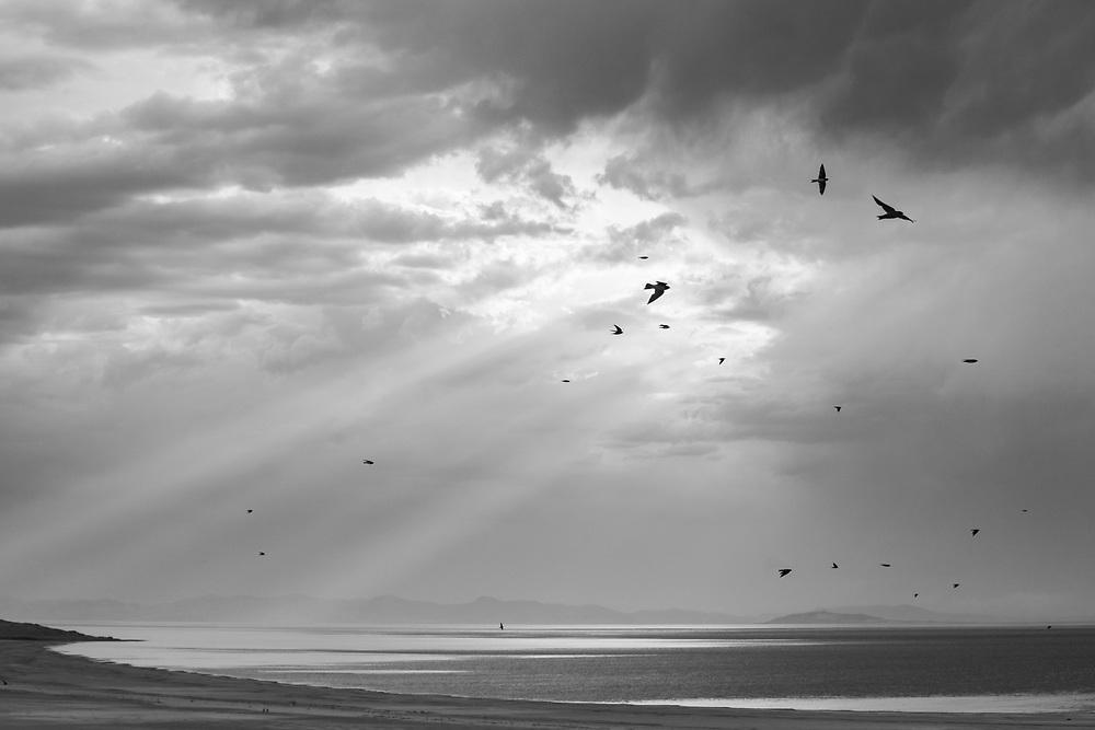https://Duncan.co/birds-at-antelope-island-state-park