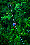 Tourist zips from tree to tree along the tops of the rain forest canopy in the Arenal region.  The zip tours are very popular with tourists in Costa Rica.
