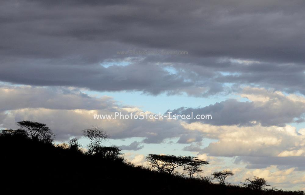 Kenya, Samburu National Park landscape