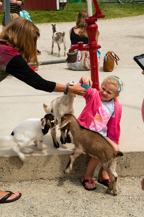 A girl feeds goat kids at The Farm, Door County, Wisconsin, USA