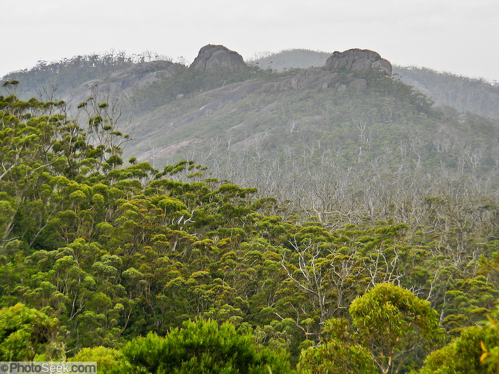 Porongurup National Park protects the Porongurup Range, an ancient and mostly leveled mountain range formed in the Precambrian over 1200 million years ago. Visit the park in Western Australia, 360 km southeast of Perth and 40 km from Albany. The Porongurup Range is a remnant of the Precambrian collision that joined Australia and Antarctica until they separated in the Paleocene. For much of the Cretaceous and Paleogene, the Porongurup Range was an island surrounded by the sea, with the Stirling Range forming the southern coastline. The formerly large mountain range has been eroded down to granite intrusions leveled into domes, no more than 15 km from east to west. The highest point in the Porongurup Range is Devils Slide at 670 meters elevation, rising 400 m above the surrounding plain. High rainfall on this ecological island explains the survival of Karri (Eucalyptus diversicolor) forests and ten endemic species of plant. Growing up to 90 meters, Karri trees stand amongst the tallest species in the world.