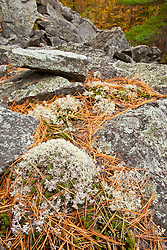 Fall in the forest on Millstone Hill in Barre, Vermont.  Abandoned granite quarry.  Fall. Reindeer lichen.