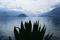 Silhouette of agave plant on shore of Lake Como with mountains Verena Italy