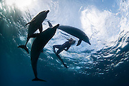 """Circle swimming is an underwater ballet of """"dances with dolphins"""""""