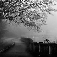 The stretch of the seawall by the Rowing Club, covered in fog, a large tree stretched out in the forground.