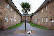 A Palm tree in the courtyard between B and C residential wings. HMP Send, closed female prison. Ripley, Surrey.