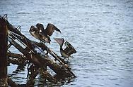 Fishing, Fishing, Shrimp, Shrimping, Oyster, oystering, Fresh, Seafood, Texas