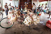 "17 JUNE 2013 - YANGON, MYANMAR:  Trussed up chickens tied to a bicycle on the Yangon-Dala Ferry. The ferry to Dala opposite Yangon on the Yangon River is the main form of transportation across the river. Every day the ferry moves tens of thousands of people across the river. Many working class Burmese live in Dala and work in Yangon. The ferry is also popular with tourists who want to experience the ""real"" Myanmar. The rides takes about 15 minutes. Burmese pay about the equivalent of .06¢ US for a ticket.  Foreigners pay about the equivalent of about $4.50 US for the same ticket.   PHOTO BY JACK KURTZ"