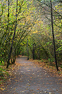 Fall foliage on the Hazelnut trees along the Little River Loop Trail in Campbell Valley Park in Langley, British Columbia, Canada