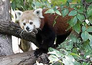 August 11, 2012: Oklahoma City Zoo