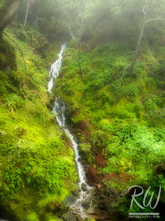 Waterfall in Foggy Temperate Rain Forest, Marin Municipal Water District, California