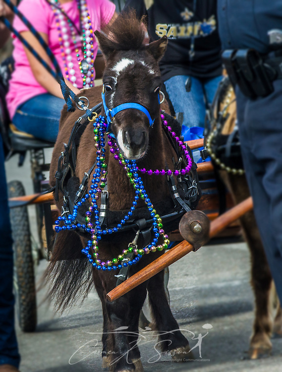 "A pony waits on Washington Street in downtown Mobile, Ala., during the Joe Cain Procession at Mardi Gras, March 2, 2014. The parade, also known as ""The People's Parade,"" celebrates the life of the late Joe Cain, who revived Mardi Gras in Mobile in 1867 after it was temporarily halted by the Civil War. Dean has portrayed the character since 1985. French settlers held the first Mardi Gras in 1703, making Mobile's celebration the oldest Mardi Gras in the United States. (Photo by Carmen K. Sisson/Cloudybright)"