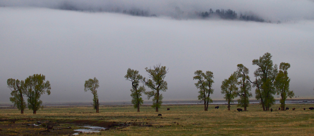 Lamar Valley Fog, Yellowstone National Park
