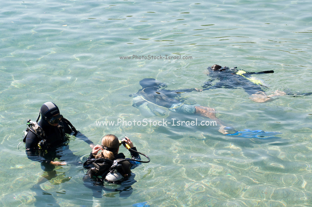 Israel, Eilat, Dolphin Reef Beach, Divers readying for a dive