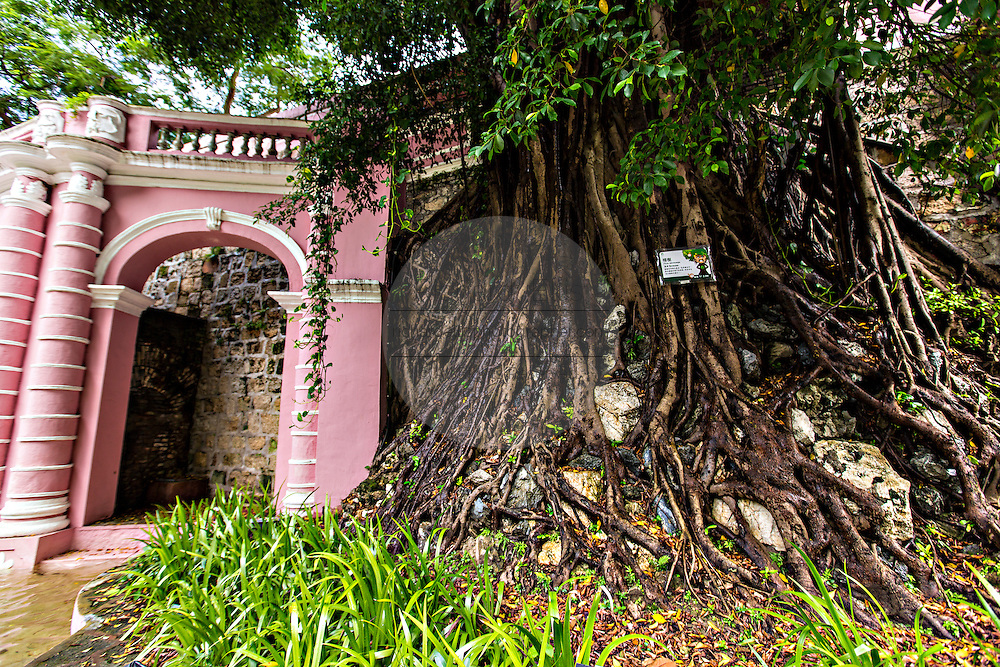 A banyan tree in the Jardim do Sao Francisco or Sao Francisco Garden in Macau.