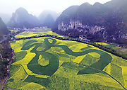 ANSHUN, CHINA - MARCH 12: (CHINA OUT) <br /> <br /> Aerial view of a large Chinese word Long which means dragon in a rape flowers field on March 12, 2016 in Anshun, Guizhou Province of China. Broad bean seedlings consisted the large Chinese word Longin the 80,000-square-meter rape flowers field in Anshun. <br /> ©Exclusivepix Media