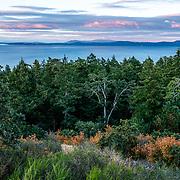 Francis King Regional Park. Victoria, BC. Canada.
