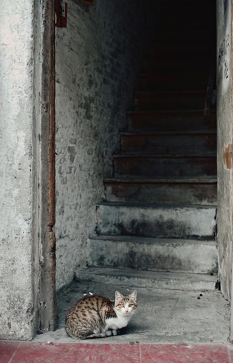Cat in old doorway, Guangzhou, China
