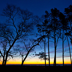 Trees silhouetted against the morning sky at Odiorne Point State Park in Rye, New Hampshire.