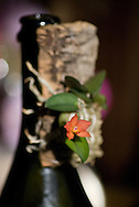 An very small epiphytic orchid presents a brilliant orange flower
