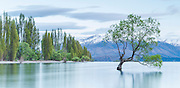 Beautiful green spring on an early morning at Lake Wanaka, New Zealand
