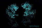 Asian Ice Dragons