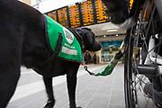 Dan and his dog Jazz at Birmingham New Street Station, Birmingham.