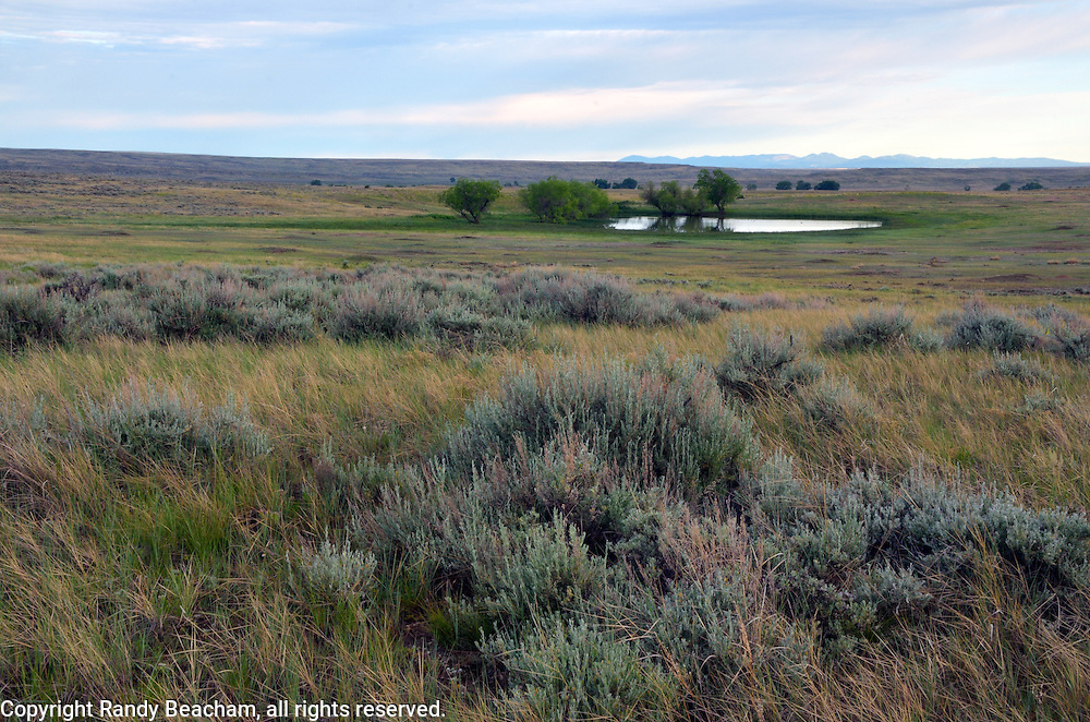 Sagebrush grassland, a prairie dog town and a wetland pond on the Great Plains of Montana at American Prairie Reserve. South of Malta in Phillips County, Montana.