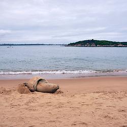 Focas, Elefantes-marinhos, leões-marinhos, lobos-marinhos -  Pinnipedia  / Earless seals