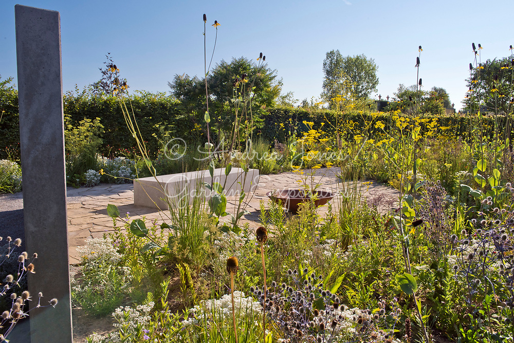 Border in foreground including Rudbeckia maxima (great coneflower), Anaphalis triplinervis, Patrinia scabiosifolia (Golden valerian, Golden lace) and Eryngium planum 'Blaukappe' (sea holly 'Blaukappe') and Ruellia humilis Gold Nugget (Night flowering wild petunia).<br /> <br /> Concrete wall and bed represents a house, rusted iron bowl represents furniture whilst the stone paving is the floor of a previous house. <br /> <br /> Carpinus betulus (hornbeam) hedge with border including Rhus typhina (Stag's horn sumach) in background.<br /> <br /> <br /> IGA Berlin 2017, 'The Garden of Vulcan'<br /> Design: Tom Stuart-Smith Ltd