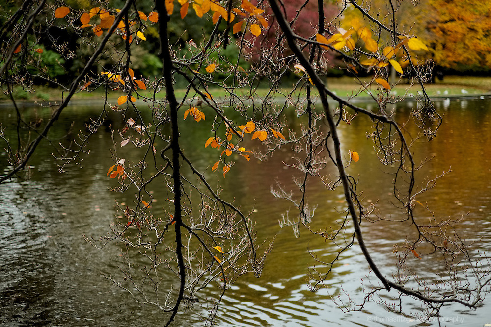 Bare branches with brown autumn leaves over a lake
