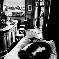 Cat in pub beside bar
