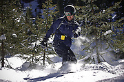 SHOT 3/12/10 1:27:51 PM - Tom Reynolds of Denver, Co. cuts fresh turns through trees and powder on Quarter Track at Silverton Mountain in Silverton, Co. Skiing and snowboarding at Silverton Mountain in Silverton, Co. Silverton Mountain is unique amongst ski resorts requiring a guide (most of the season), avalanche gear and limiting the number of daily visitors. There are multiple bowls, chutes, cliffs and natural terrain features to be discovered during a visit to Silverton Mountain. It is the highest Ski Area in North America with a peak of 13,487' and it is also the steepest with no easy way down. The mountain is left in it's natural state with the exception of the avalanche reduction work which occurs. There is only one chair at the mountain though most skiiers and snowboarders will end up hiking in various directions at the top. The mountain also features heliskiing trips for $159 a trip (at the time of visit). The mountain opened in 2002. (Photo by Marc Piscotty / © 2010)