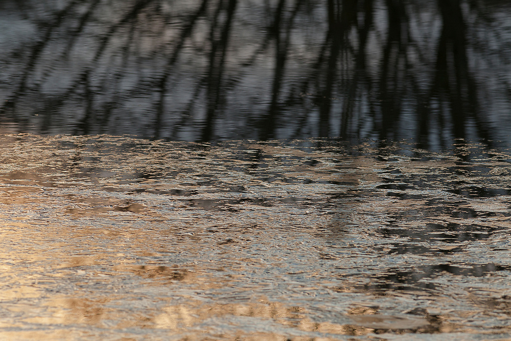 Ice textures on frozen water with a reflection of tree branches in last sunlight.