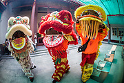 "09 FEBRUARY 2013 - BANGKOK, THAILAND: Lion Dancers perform in a Chinese temple in Chinatown in Bangkok. Bangkok has a large Chinese emigrant population, most of whom settled in Thailand in the 18th and 19th centuries. Chinese, or Lunar, New Year is celebrated with fireworks and parades in Chinese communities throughout Thailand. The coming year will be the ""Year of the Snake"" in the Chinese zodiac.    PHOTO BY JACK KURTZ"
