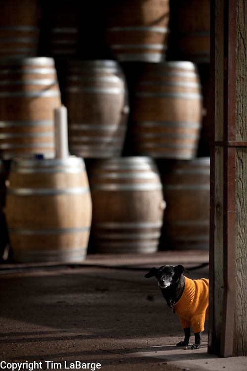 harvest and wine making at Vista Hills Vineyard in Dundee. Image © 2011 Tim LaBarge