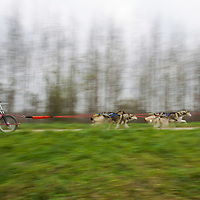 Participant competes during the FISTC Dog Cart European Championships in Venek (about 136 km Norht-West of capital city Budapest), Hungary on November 22, 2014. ATTILA VOLGYI