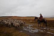 10 May 2011, Semonkong Community Council, Lesotho. Herdsmen move their flock of sheep in the pouring rain.