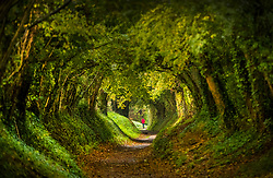 © Licensed to London News Pictures. 04/11/2019. Chichester, UK. An early riser walks through an autumnal tree tunnel near Chichester at dawn. Low pressure over the UK is bringing continued rain showers. Photo credit: Peter Macdiarmid/LNP