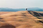 Italie, Toscane, 25-8-2001Heuvelachtig landschap met boom, cypres, bij ondergaande zon. Droogte, klimaat, associatie leegte, eenzaamheid.Foto: Flip Franssen