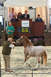© Licensed to London News Pictures. 19/10/2019. Llanelwedd, Powys, Wales, UK. Bidding gets going at 11.00am on the first day of the 66th Fayre Oaks Pony Sale, held by Brightwell auctioneers at the Royal Welsh Showground, Llanelwedd in Powys, UK. <br /> The Fayre Oaks Pony Sale is the largest Sale in the World of registered Welsh Mountain Ponies Section A, Welsh Ponies Section B and their Part Breds. Photo credit: Graham M. Lawrence/LNP