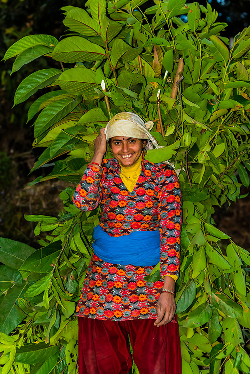Woman carrying tree branches in the mountains near Pokhara, Nepal.